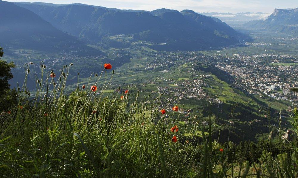 Gipfeltour zum Ifinger